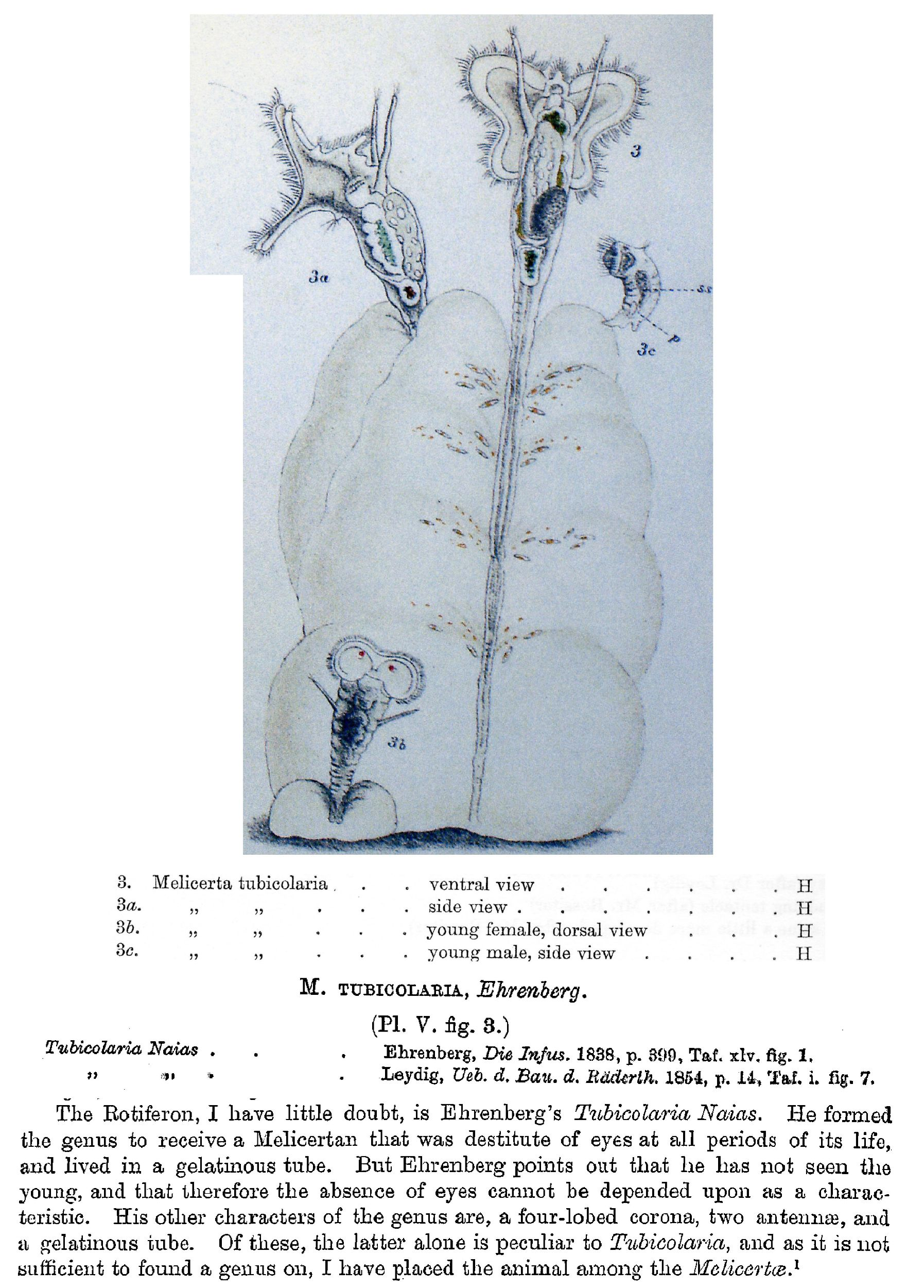 Literature – Search the Rotifer World Catalog